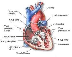 cara mengatasi jantung