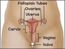 Obat Alami Kanker Vulva